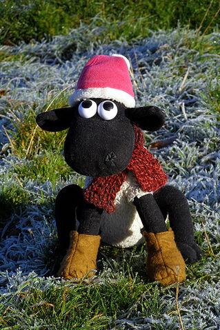 File:Shaun in the Winter.jpg
