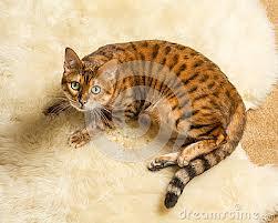 File:Cat2.jpg