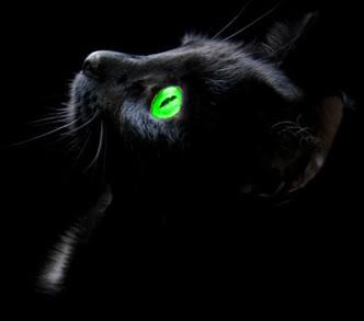 File:Shadowkit.jpg
