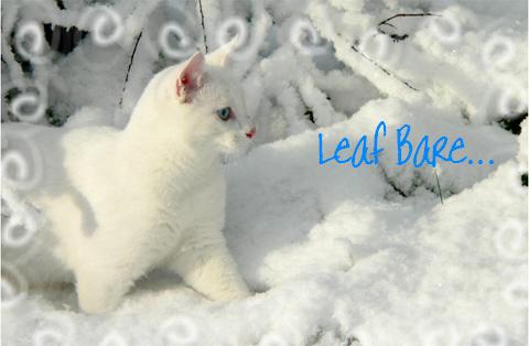 File:Leaf Bare.jpg