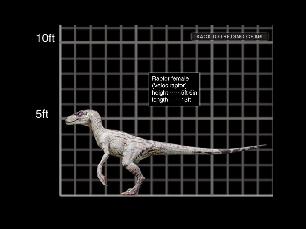 Image - Female Raptor CD.jpg | Jurassic Park Fanon Wiki ...