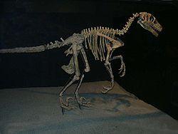 File:Variraptor.jpg