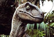 141 velociraptor