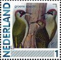 Netherlands 2011 Birds in Netherlands a16.jpg