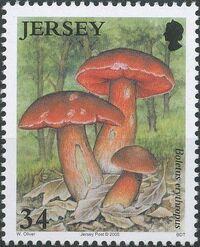 Jersey 2005 Nature - Fungi II b