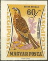 Hungary 1962 65th Anniversary of the Agricultural Museum - Birds of Prey k.jpg