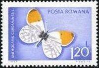Romania 1969 Butterflies g