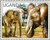 Uganda 2012 Fauna of African Great Lakes Region - African Elephant - African Bush Elephant c