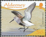 Alderney 2009 Resident Birds Part 4 (Waders) e