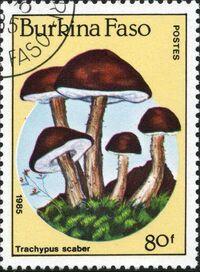 Burkina Faso 1985 Fungi e