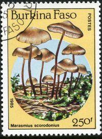 Burkina Faso 1985 Fungi g