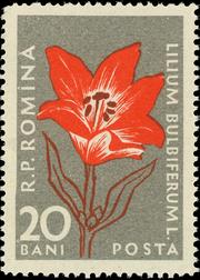 Romania 1957 Carpathian Mountain Flowers c
