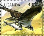 Uganda 2012 Fauna of African Great Lakes Region - Birds of Prey - Western Marsh Harrier c
