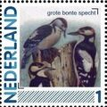 Netherlands 2011 Birds in Netherlands a18.jpg