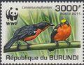 Burundi 2011 WWF Papyrus Gonolek a.jpg