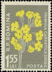 Romania 1957 Carpathian Mountain Flowers g