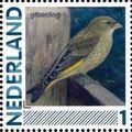 Netherlands 2011 Birds in Netherlands a17.jpg