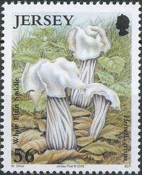 Jersey 2005 Nature - Fungi II f
