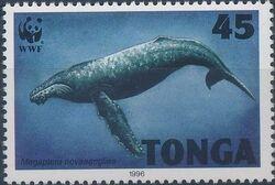 Tonga 1996 WWF Humpback Whale a