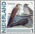 Netherlands 2011 Birds in Netherlands a32.jpg