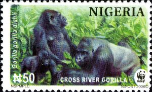 Nigeria 2008 WWF Cross River Gorilla b