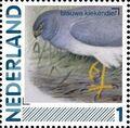 Netherlands 2011 Birds in Netherlands a3.jpg