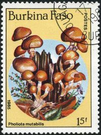 Burkina Faso 1985 Fungi a