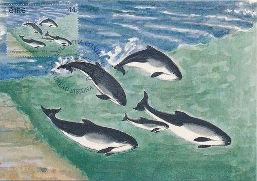 Ireland 1997 Marine Mammals MCb