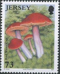 Jersey 2005 Nature - Fungi II e