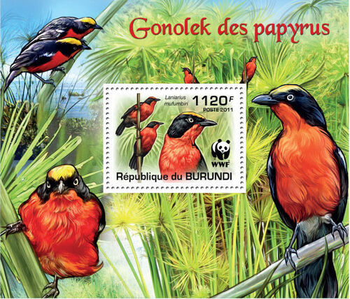 Burundi 2011 WWF Papyrus Gonolek l