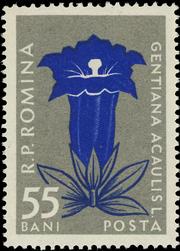 Romania 1957 Carpathian Mountain Flowers e
