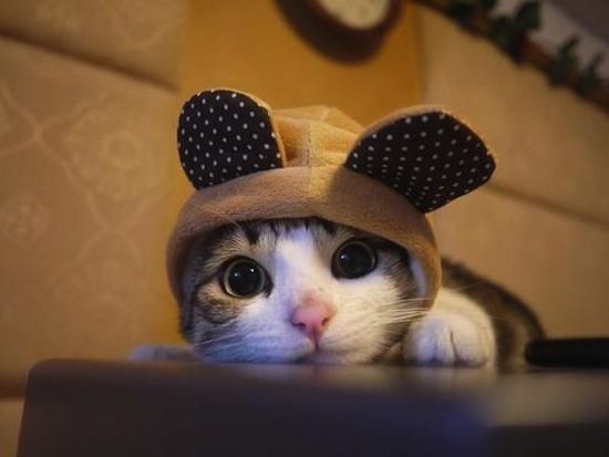 File:Kitten6.jpg