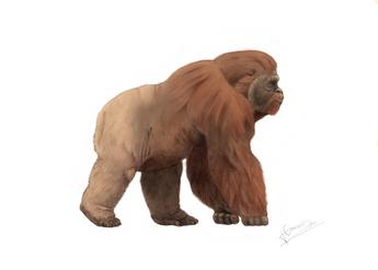 Gigantopithecus 2
