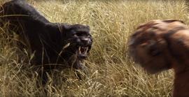 Bagheera vs. Shere Khan