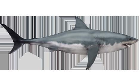 megalodon jurassic fight club fandom powered by wikia shark clipart black and white shark clipart black