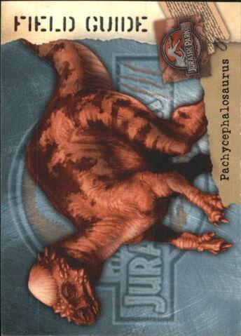 File:2001 Jurassic Park III 3-D 69 Pachycephalosaurus front.jpg