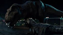 Blue and Rexy after the fight