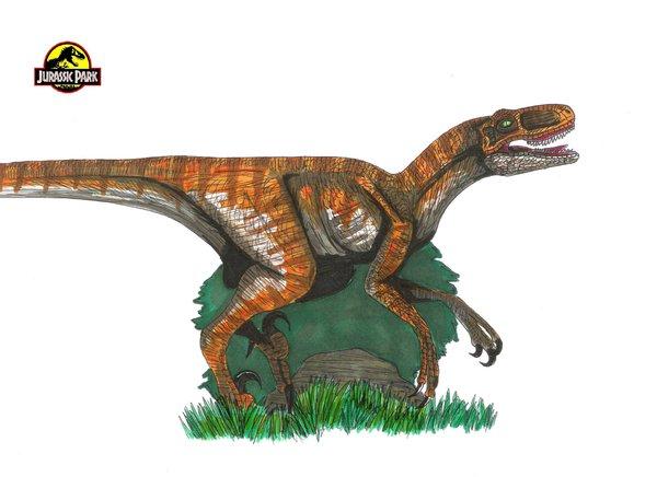 File:Jp Velociraptor Nublariensis by hellraptor.jpg