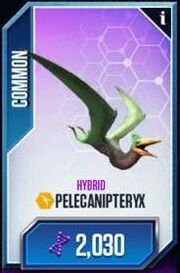 Pelicanipteryx