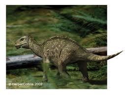 File:Mussaurus.jpg