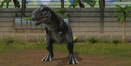 Jurassic World Majungasaurus (14)