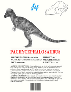Ingen Dinosaur Info Sheets Pachycephalosaurus