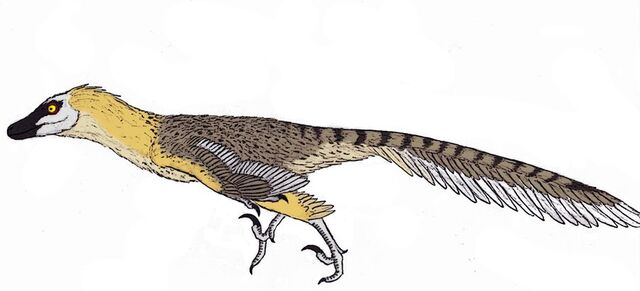 File:Velociraptor mongoliensis by themorlock-d51sxfp.jpg