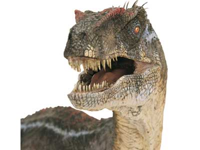File:Velociraptor-head.jpg