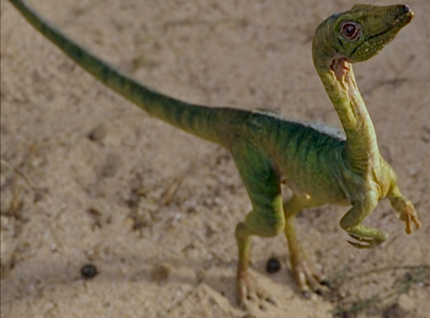 compsognathus jurassic park wiki fandom powered by wikia
