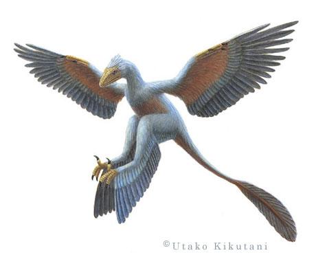 File:Microraptor-Utako-Kikutani.jpg