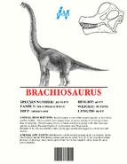 Ingen Dinosaur Info Sheets Brachiosaurus