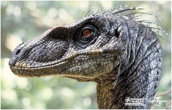File:Velociraptor portrait.jpg