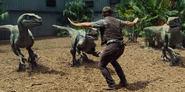 Velociraptors and Owen