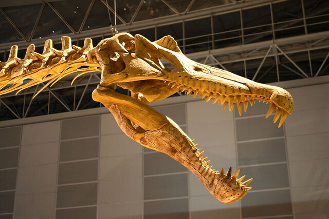 File:Spinosaurus Skull.jpg